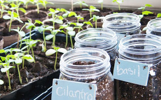 mason jar herb garden, gardening, mason jars, repurposing upcycling