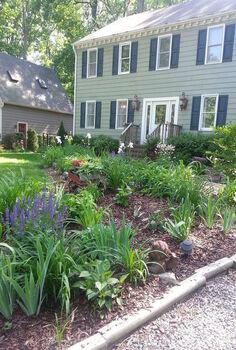 gardening salvia summer bloom, flowers, gardening