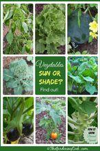 gardening tips sunlight vegetable growth, gardening