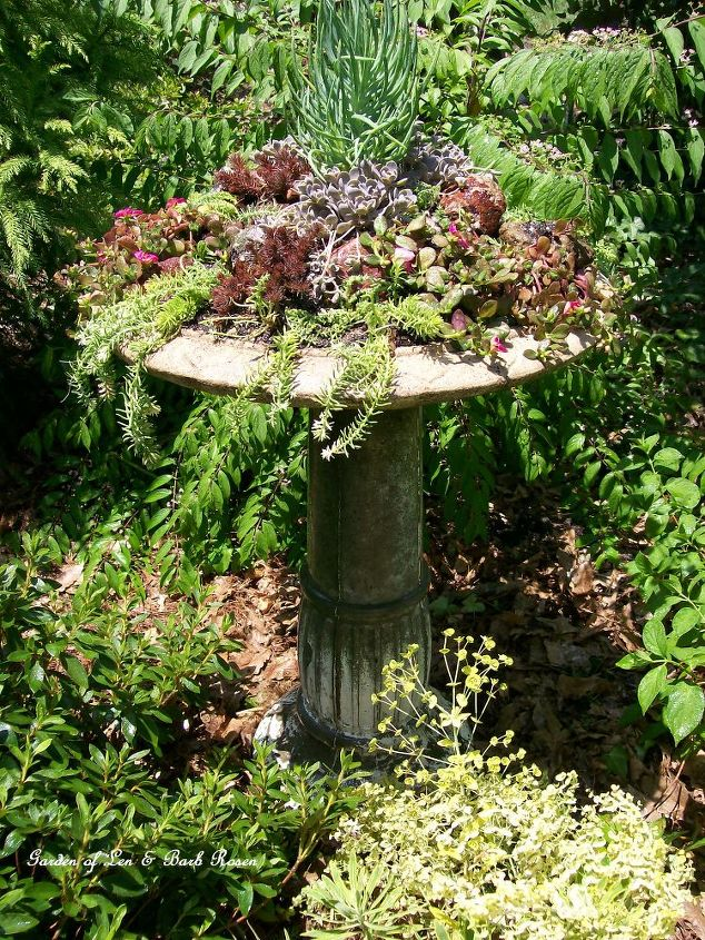 Making a succulent garden in an old birdbath hometalk - How to make a succulent container garden ...