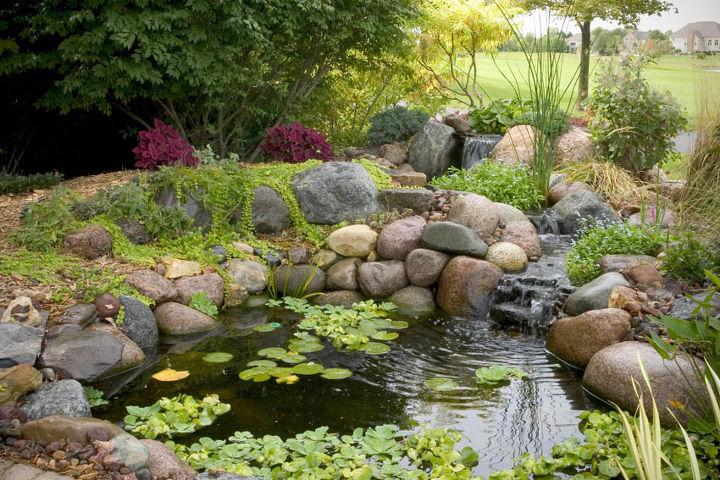 Small water gardens hometalk for Small backyard water gardens