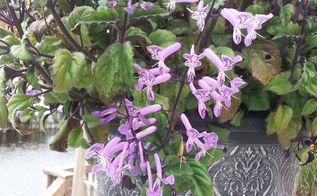 plant id, gardening