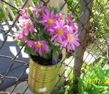 reused tin can from vegetables, flowers, gardening, repurposing upcycling, This is a pic of a reused tin can I made into a flower pot to hang on the fence to dress it up abit