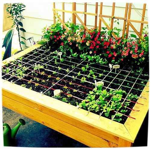 Salad Dressing: 6 Dirt Cheap Ways To Turn Your Garden Into