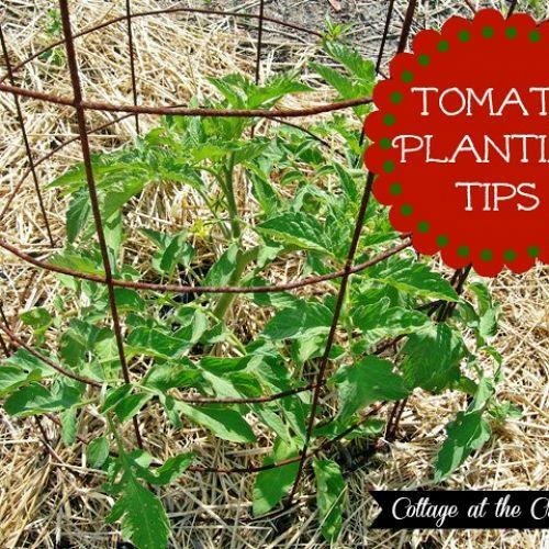 Our tomato planting tips hometalk for Ideas for tomatoes from the garden
