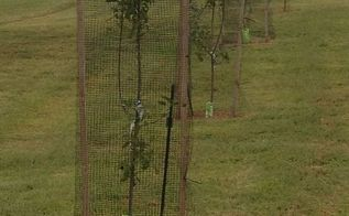 protecting your garden trees and landscape from deer, flowers, gardening, Learning our lesson from last year all of our orchard trees are now covered with deer fencing for the fall winter and early spring months