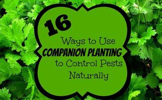 16 ways to use companion planting to control pests naturally, gardening, pest control, Grow beans among your eggplant to help repel the Colorado potato beetle