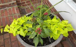 plan now annual flower containers, container gardening, flowers, gardening, Spring starters Dracaena pentas potato vine