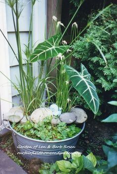 galvanized tub water garden, gardening, Galvanized tub water garden see more of my projects and ideas at or
