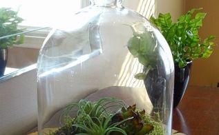 diy winter snow succulent terrarium, crafts, succulents, terrarium