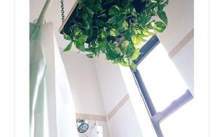 diy hanging shower planter, bathroom ideas, container gardening, gardening