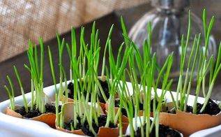 reuse those eggshells and grow a little green, composting, gardening, go green, homesteading, repurposing upcycling