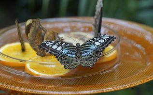 4 super ways to attract butterflies let nature beautify your garden, gardening, outdoor living, Butterfly House