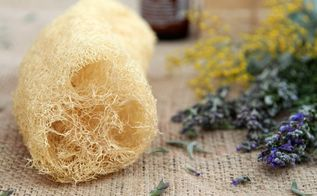 how to grow your sponge and eat it too, gardening, how to