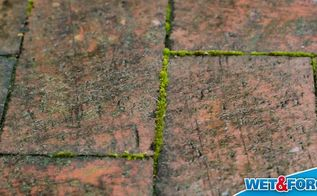 remove moss easy as pie, cleaning tips, concrete masonry, how to, 2 Defeat Moss on Your Driveway