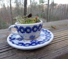 terrarium miniature tea cup saucer moss zen lilliputian garden fairy, gardening, terrarium, Teacup Terrarium