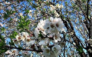 an almond wreath for spring diymyspring, crafts, repurposing upcycling, seasonal holiday decor, wreaths