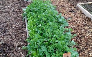 the 3 secrets to a weed free garden, gardening, gardening pests, how to, landscape, Mulch is a big key to a weed free garden