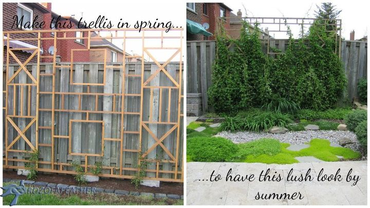 Build a trellis and privacy screen hometalk for How to build a privacy screen outdoor