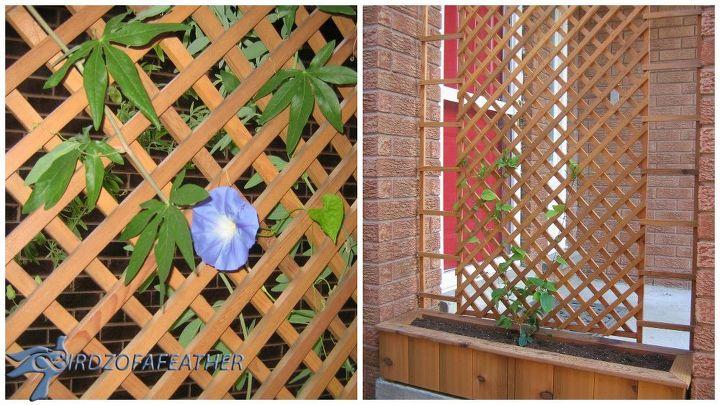 Build a trellis and privacy screen hometalk for Trellis planter garden screen