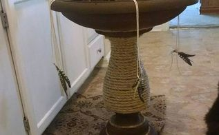 old birdbath comes to life, chalk paint, painted furniture, pets, pets animals, After