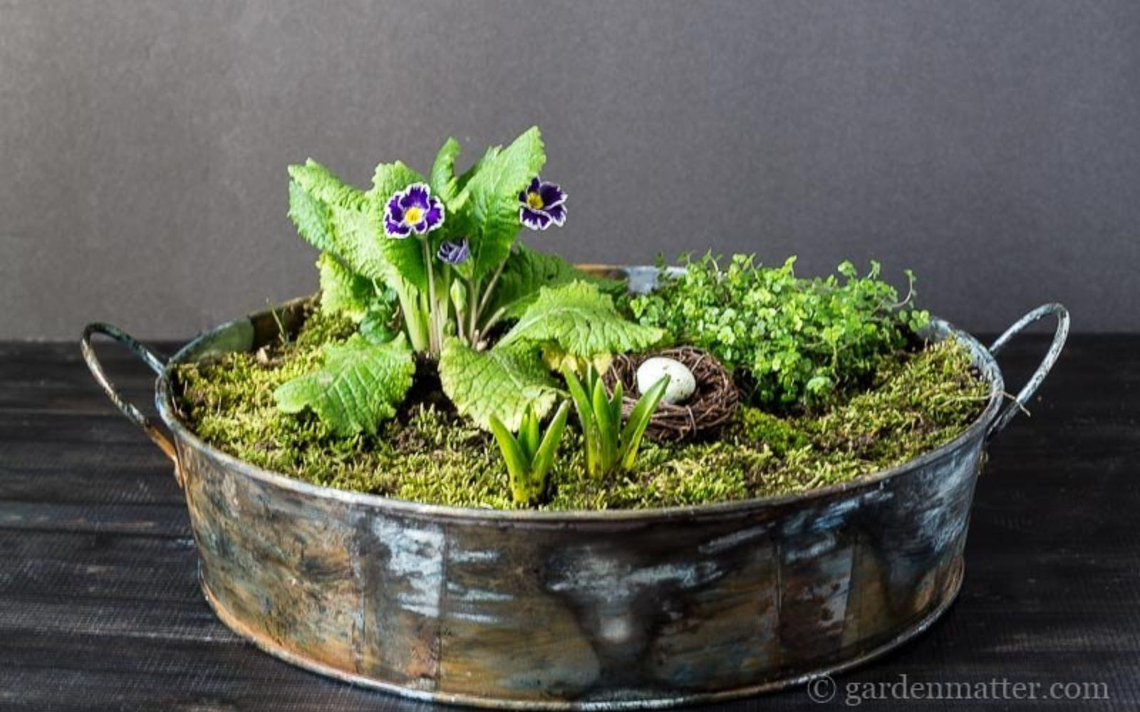 s these are the hottest diy spring trends of 2016, crafts, seasonal holiday decor, Make mini fairy gardens to keep indoors