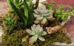 succulent mini garden, container gardening, flowers, gardening, succulents, succulents in a mini garden