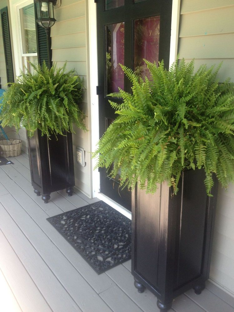 11 quick and easy curb appeal ideas that make a huge Tall narrow indoor plants
