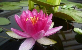 container water garden, container gardening, gardening, ponds water features