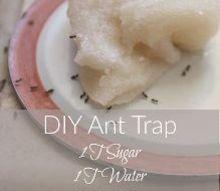 diy ant trap and pesticide powder, pest control