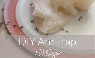 diy ant trap and pesticide powder, pest control