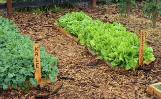 10 spring garden crops to get growing now, gardening, homesteading
