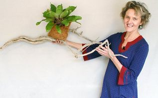 an easy way to grow bromeliads on driftwood or a branch, flowers, gardening, succulents