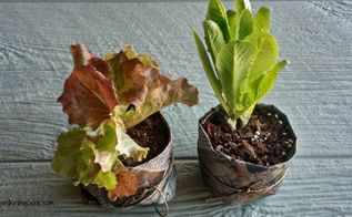 make your own diy newspaper seed pots, container gardening, crafts, gardening, how to, repurposing upcycling