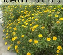 drought tolerant front yard full of flowers, gardening