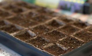 starting seeds, container gardening, gardening, how to