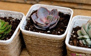 this diy succulent project honors health mom and mother earth, container gardening, flowers, gardening, succulents