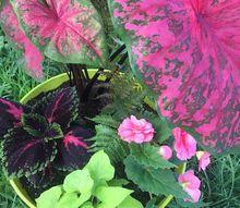gorgeous shady planter recipe , gardening
