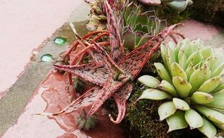 how to keep your succulent wreath alive looking good, crafts, flowers, gardening, how to, succulents
