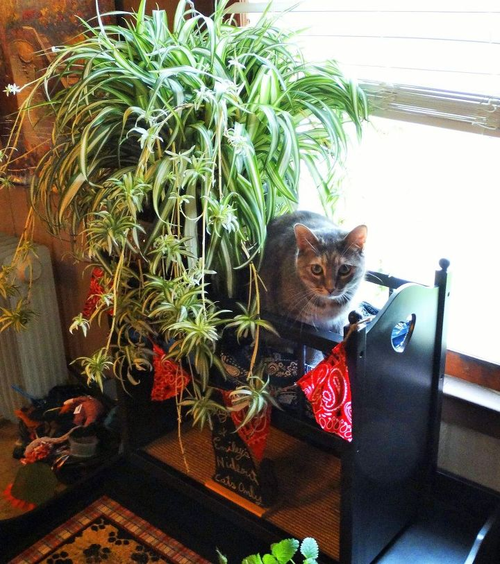 Indoor cat garden hometalk for Indoor gardening with cats