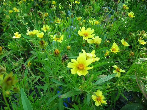 Plant identification by leaves – Garden Plants Identification