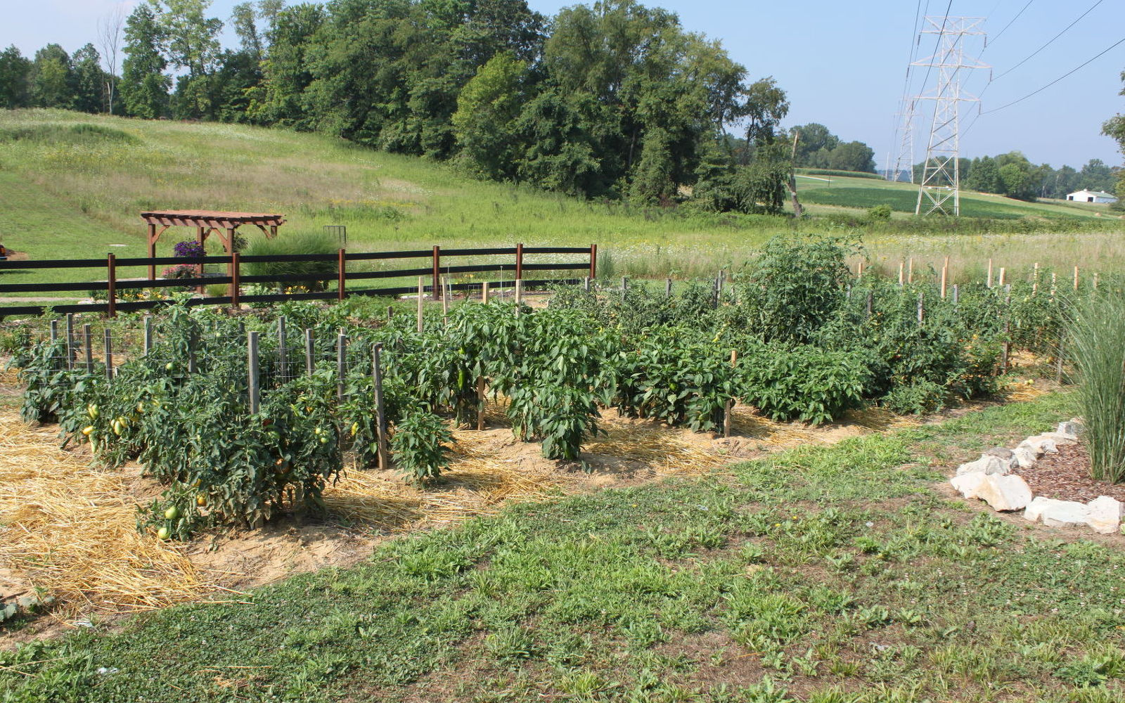 s the easiest ways to grow a bumper crop of tomatoes, gardening, Mulch your plants with a 2 layer of compost