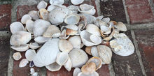vacation sea shells turned gorgeous home decor