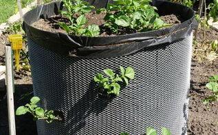 hugh potato bins for small gardens, container gardening, gardening
