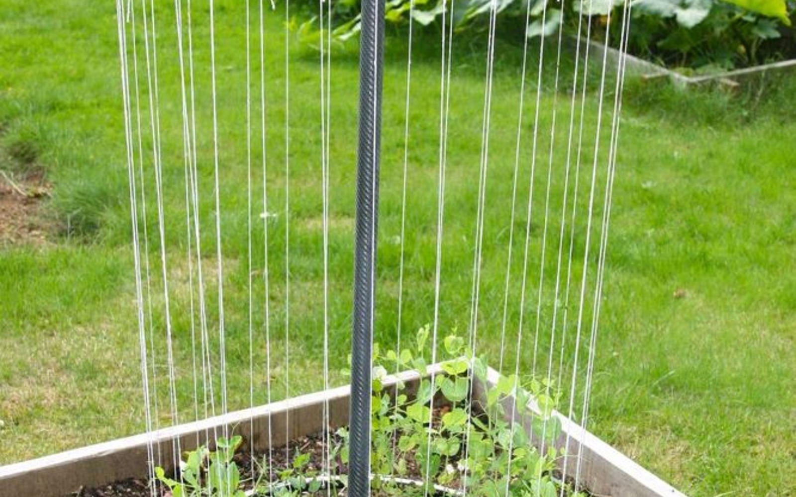s 17 ways to build a gorgeous garden trellis this summer, gardening, Turn bicycle wheels into round climbing space