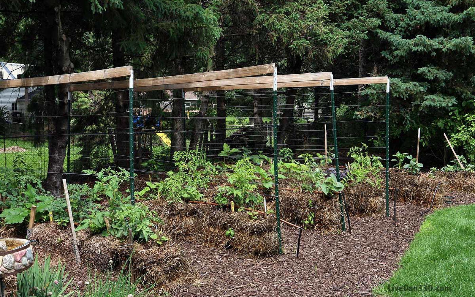 s 17 ways to build a gorgeous garden trellis this summer, gardening, Wrap wire lines around a few poles