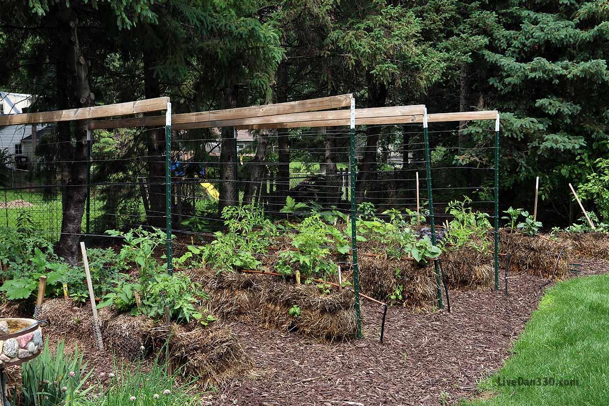 17 Ways To Build A Gorgeous Garden Trellis This Summer