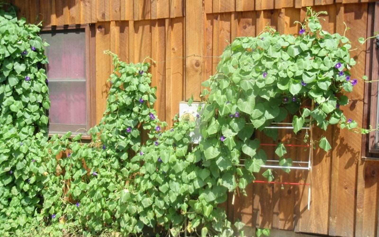 s 17 ways to build a gorgeous garden trellis this summer, gardening, Hang an old drying rack near your vines