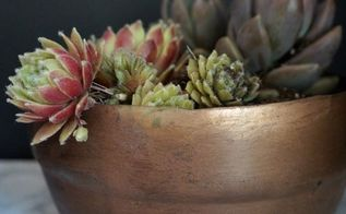 diy vintage copper pot, container gardening, crafts, gardening, repurposing upcycling, succulents