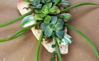 succulent craft, container gardening, crafts, flowers, gardening, succulents